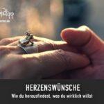 DRACHENSPUREN // HERZENSWÜNSCHE