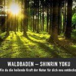 Waldbaden - Shinrin Yoku // Blog Drachenspuren - Sakira Philipp