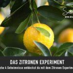 Zitronen Experiment // Sakira Philipp - Drachenspuren