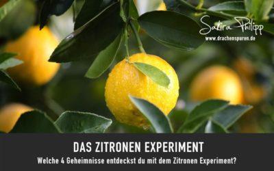 DAS ZITRONEN EXPERIMENT